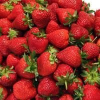 Berry amazing facts about the humble Strawberry